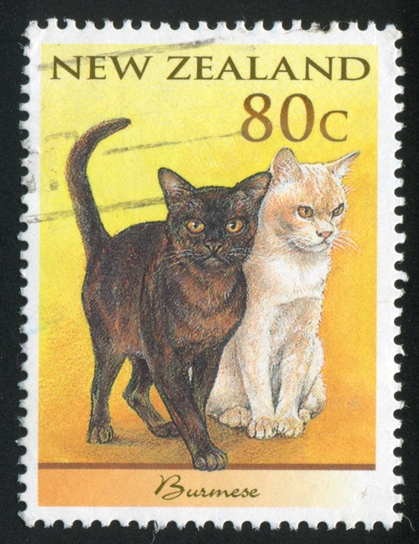 600px-kiwi-cat-stamp