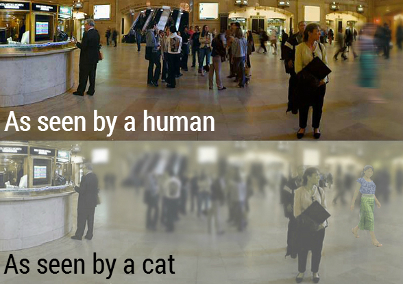 What Do Cats See When They Look At Humans