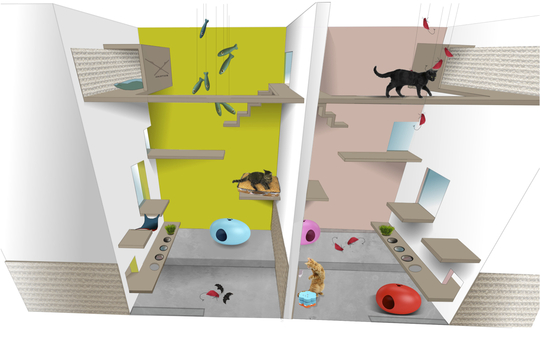 Aristide hotel for cats only opens in paris the paris cat for Adresse chambre des notaires de paris