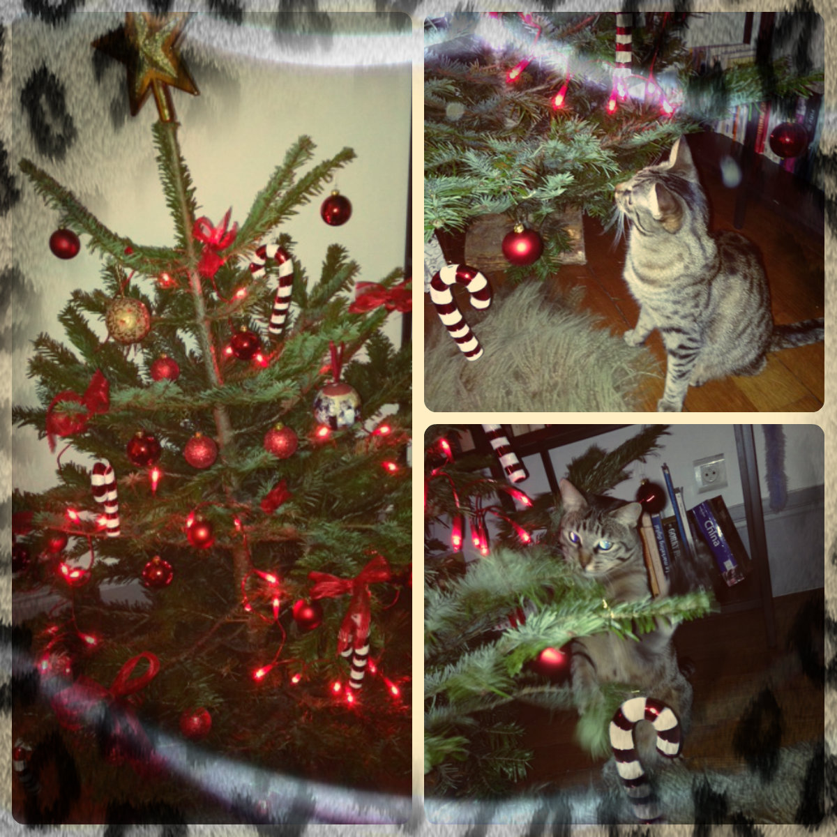 Putting Up A Christmas Tree With A Cat In The House!