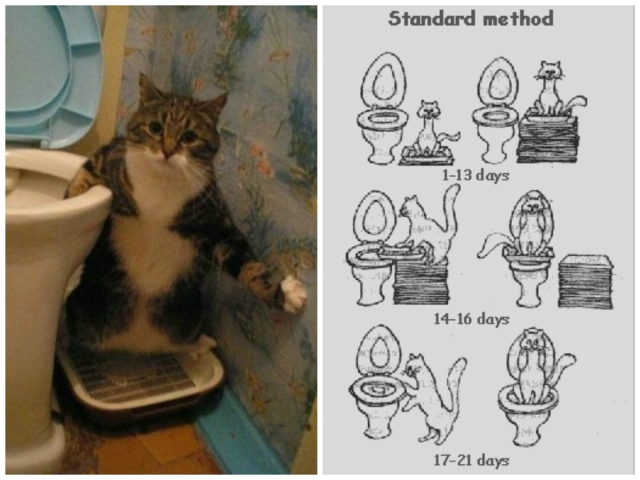 Is Teaching Your Cat To Use The Toilet A Good Idea The